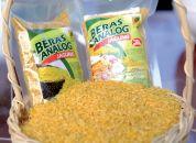 Beras Analog Jagung Rendah Gula Tinggi Serat IPB